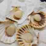 Scallops- Cooking in an Airbnb